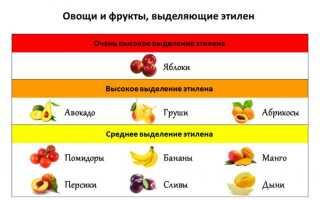 Як правильно зберігати вдома зелені помідори до дозрівання, щоб вони почервоніли