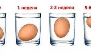 Термін придатності яєць: скільки можна зберігати і за яких умов