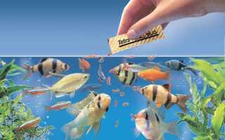 Акваріумні рибки невибагливі в догляді: гуппі, півники, скалярии